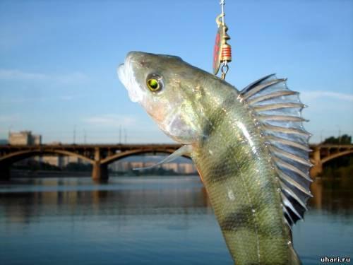 на что ловить рыбу в абакане